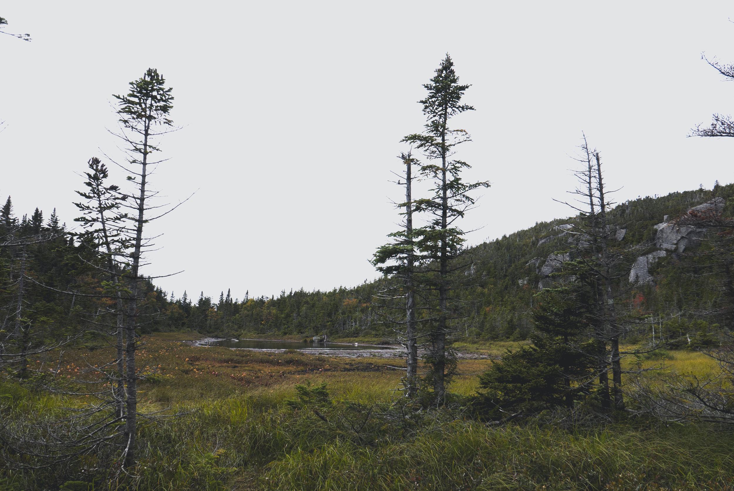 AT-WhiteMtns-Maine-20.jpg