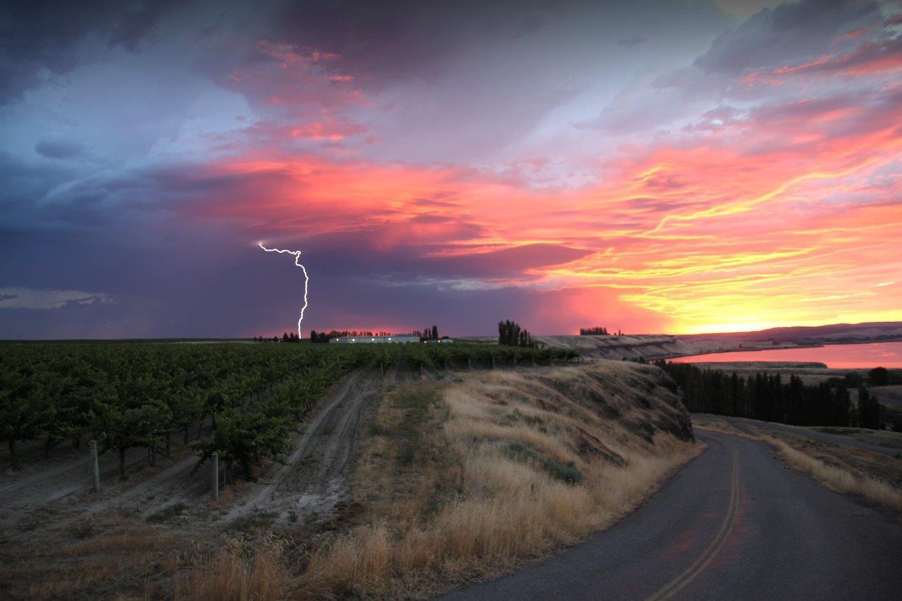 Kamiak-Lightning-Vineyard-Pic.jpg