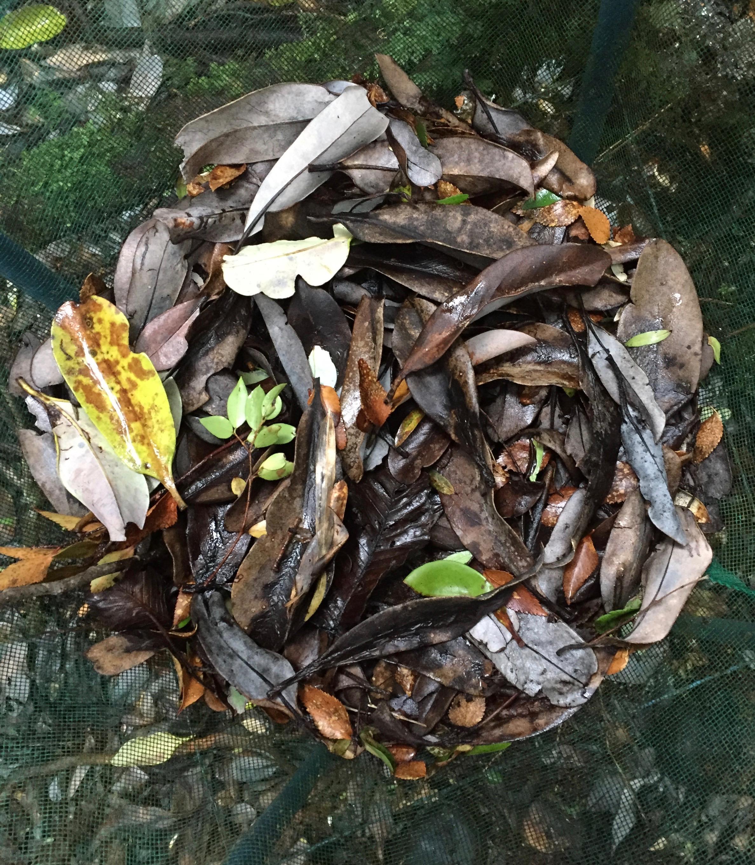 Francisca Moenne, leaf litter, Senda Darwin (Chiloé), photo on field (2016)