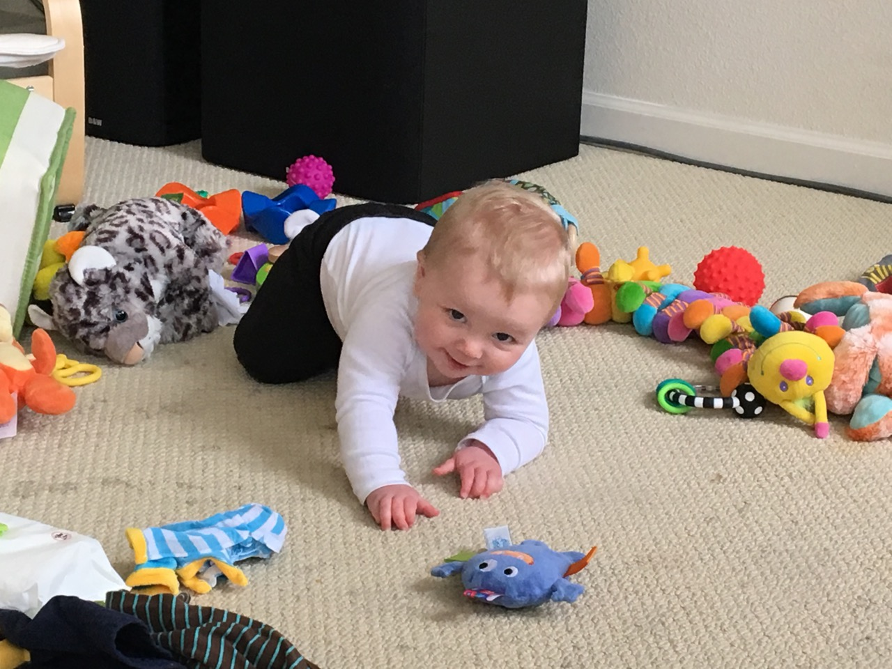 Attempting to crawl...