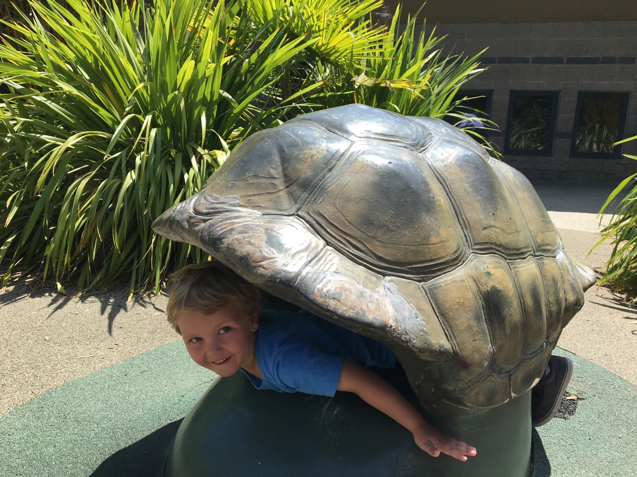 Pretending to be a tortoise (August)