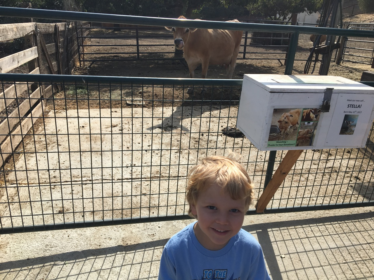Cow time at the farm (September)