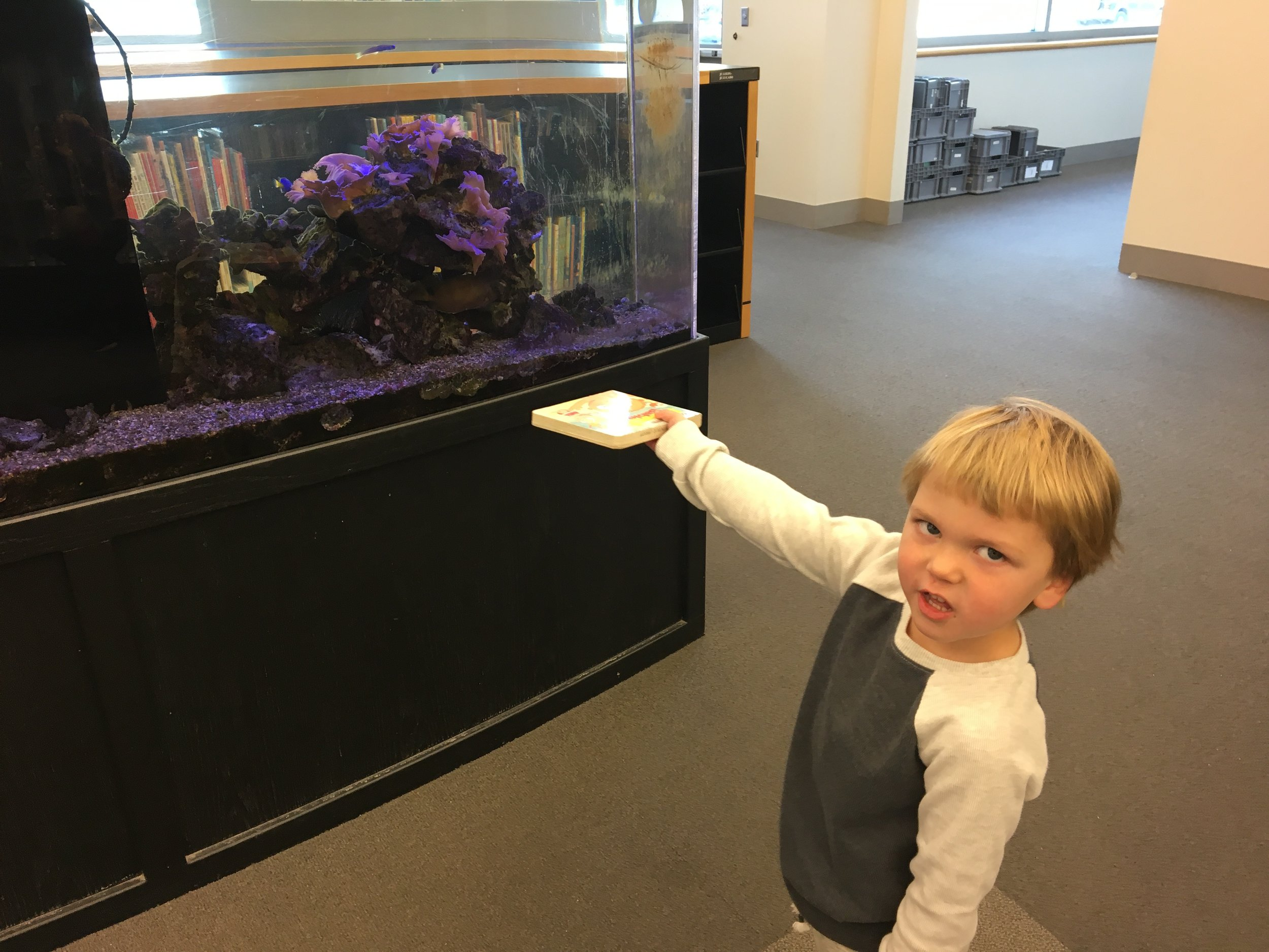 W52: Checking out the aquarium at the library