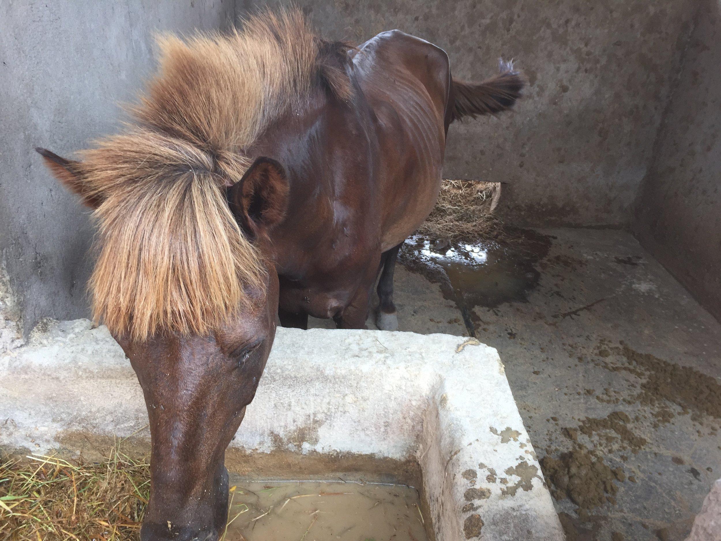 Gilli_ponies_0022.JPG