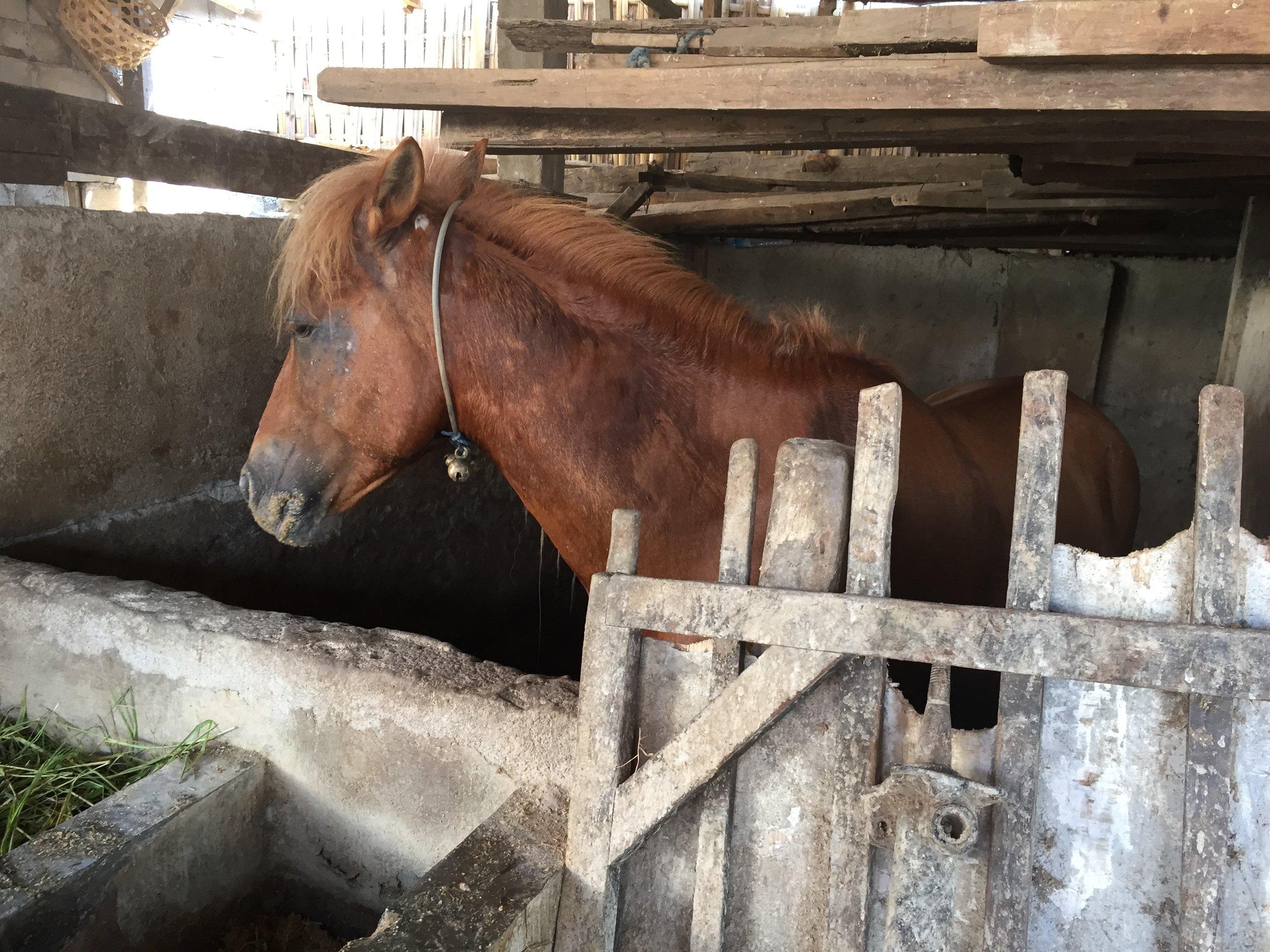 Gilli_ponies_0031.JPG