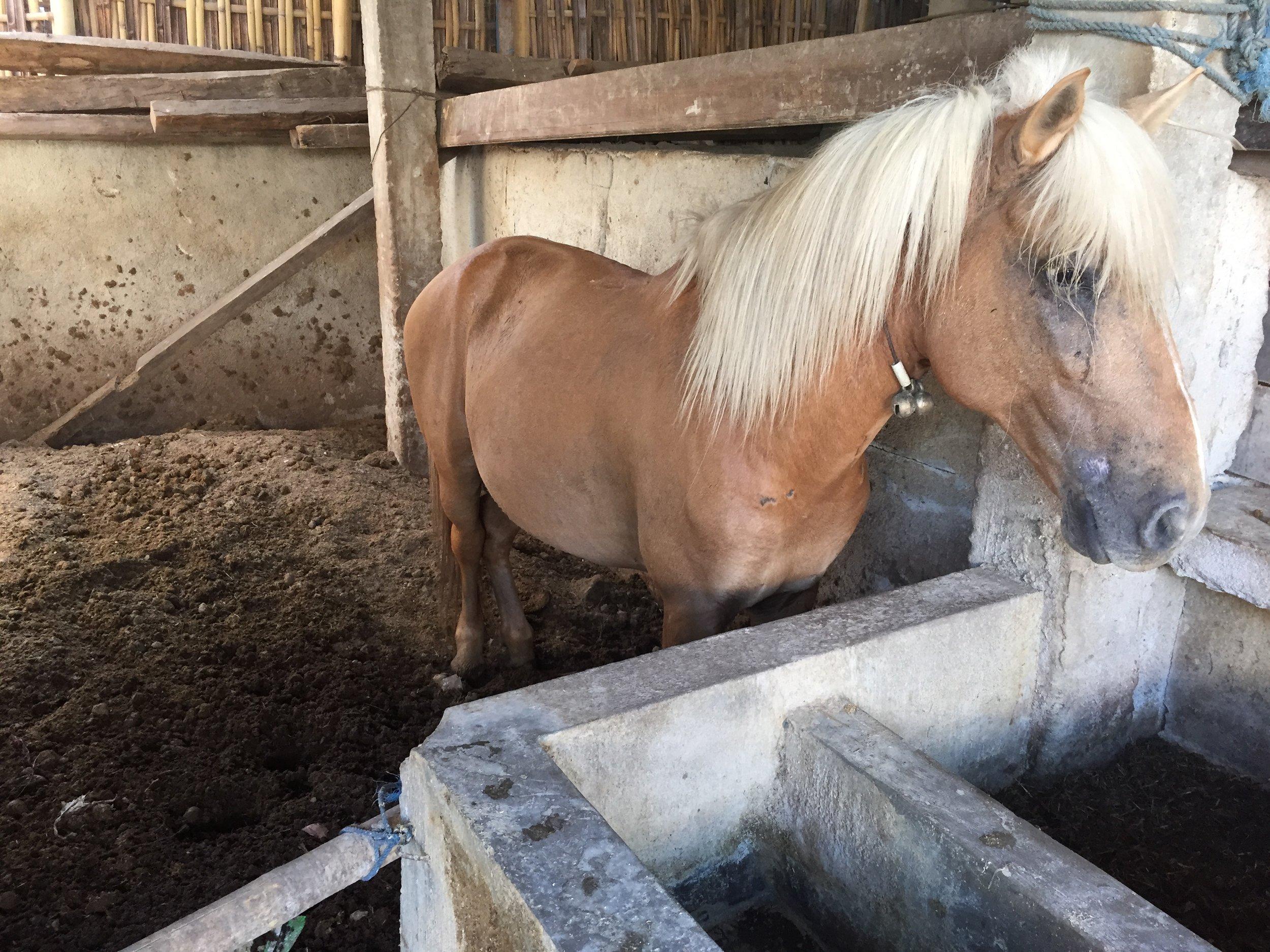 Gilli_ponies_0032.JPG