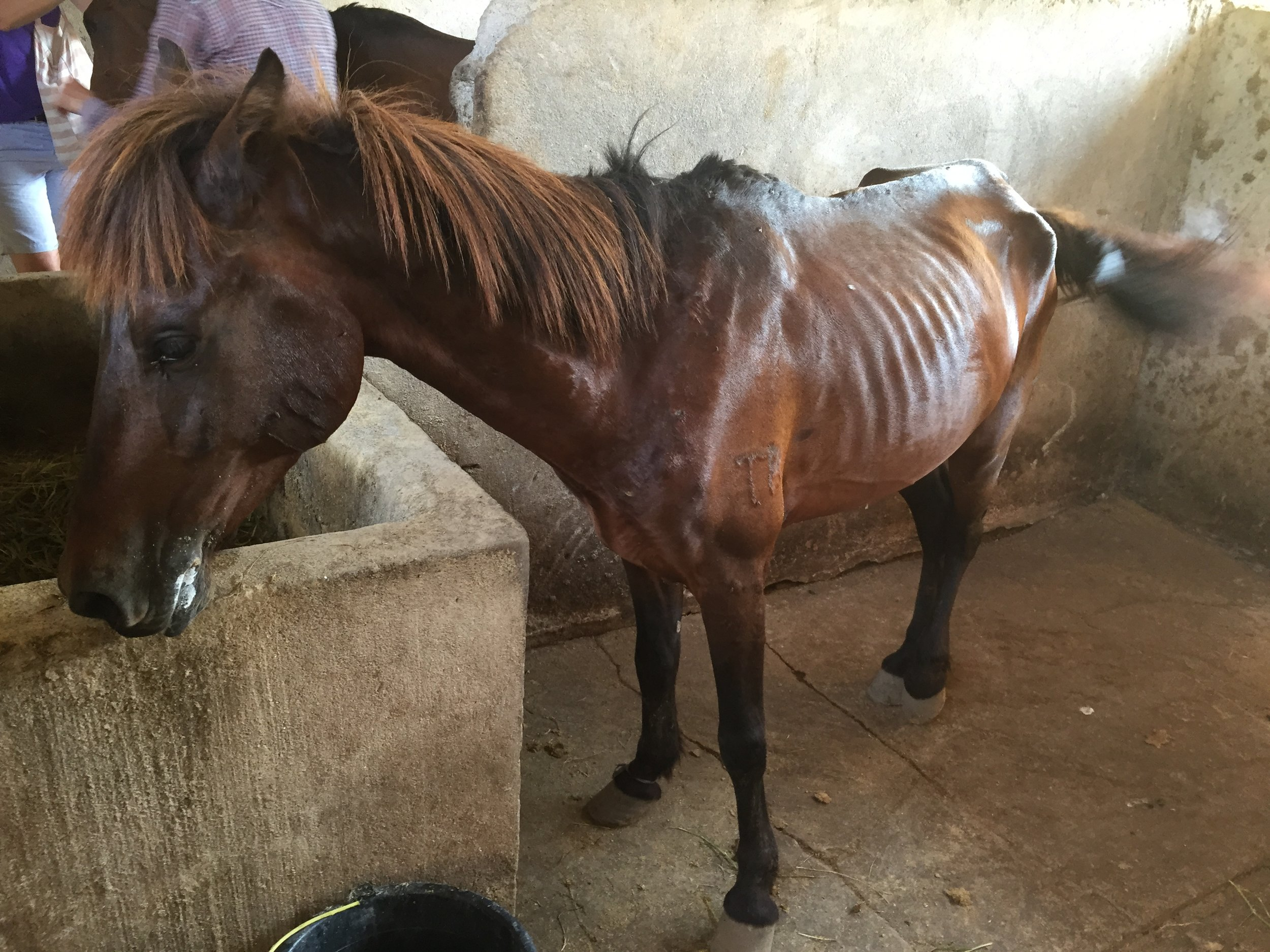 Gilli_ponies_0034.JPG