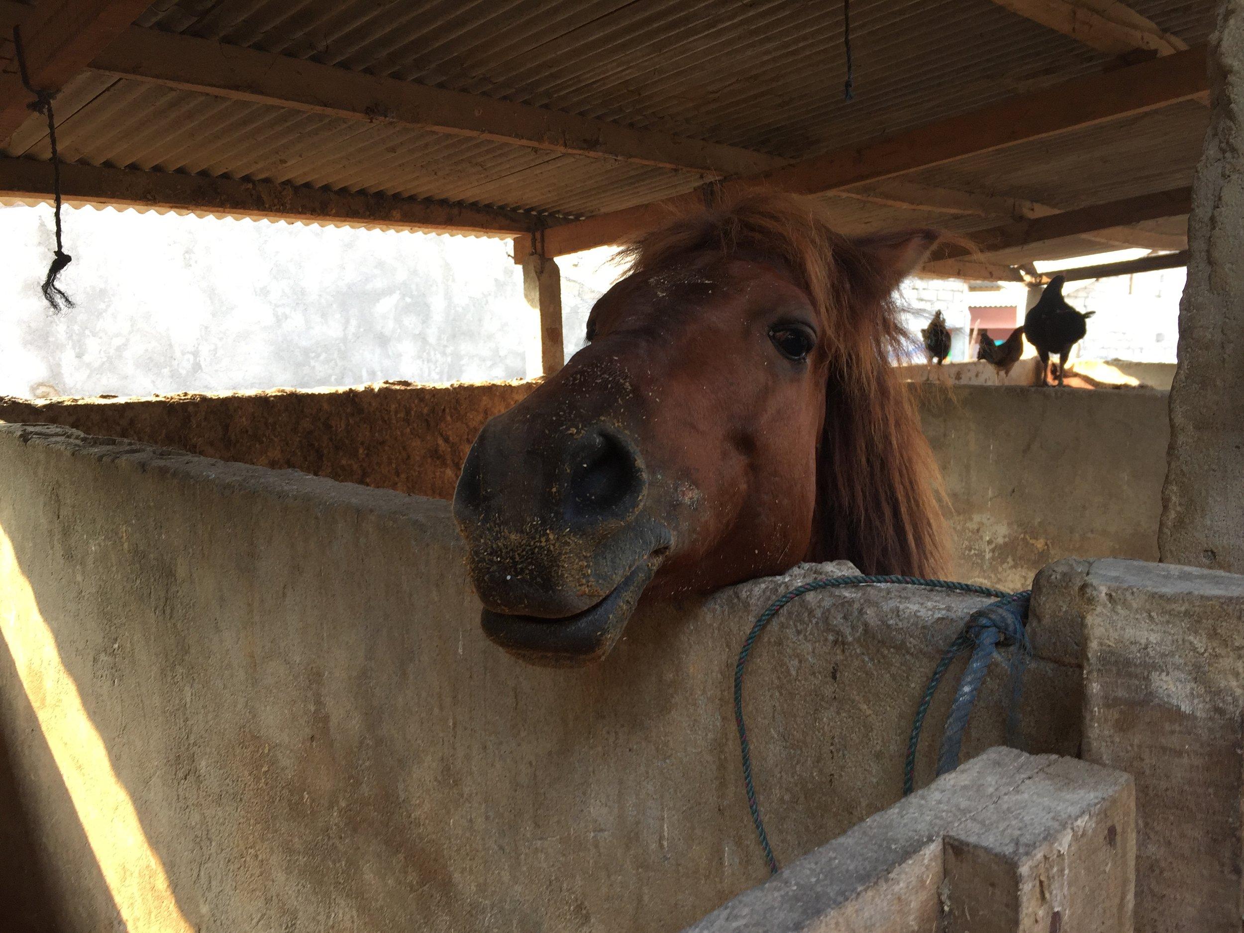 Gilli_ponies_0038.JPG