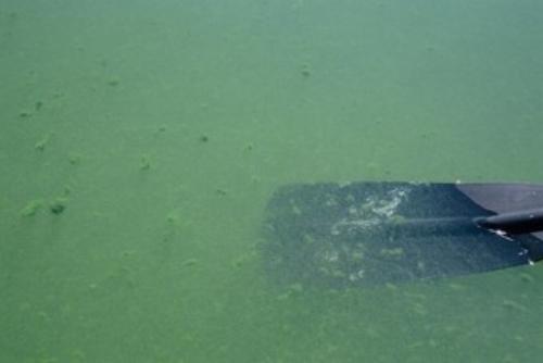 Saddle Lake raw water poor quality raw water
