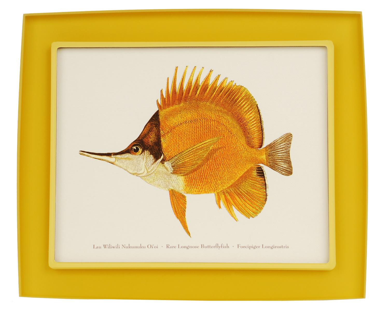 Painted Fish Prisma