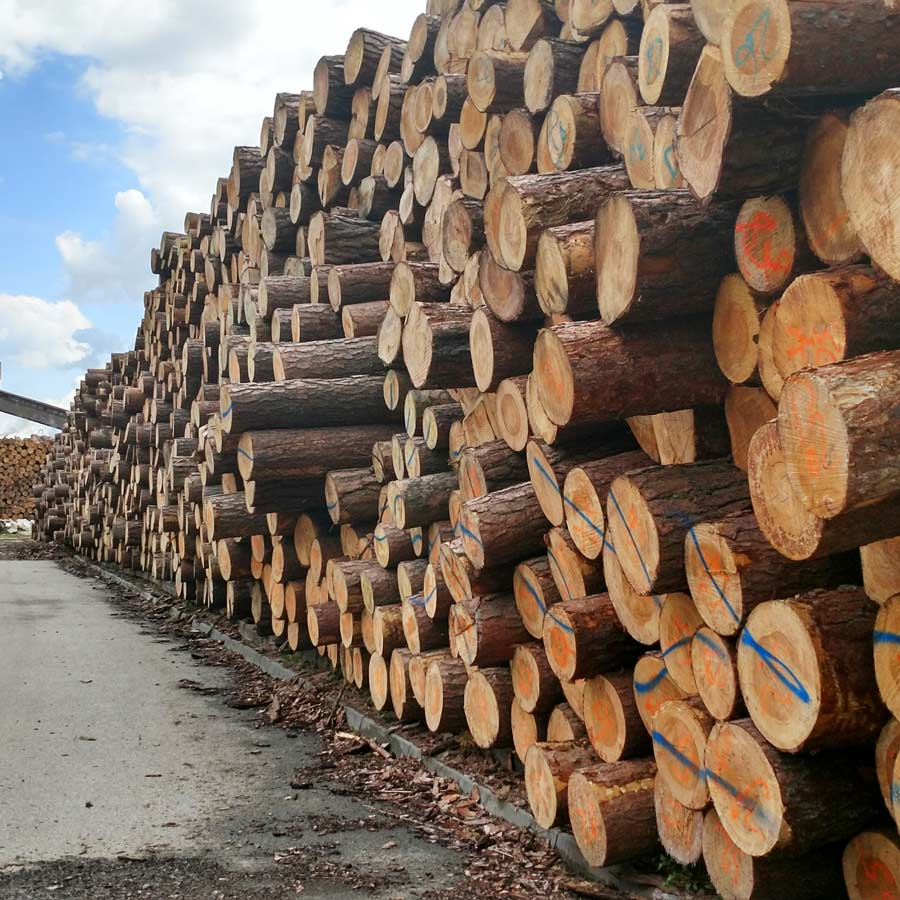 Whole tree logs waiting to be turned into incredible picture frames.
