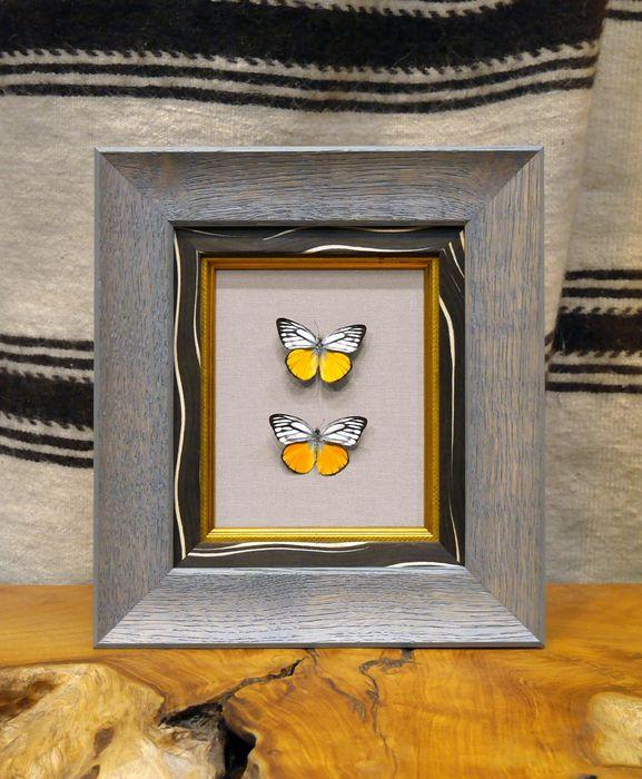 framedbutterflies.jpeg