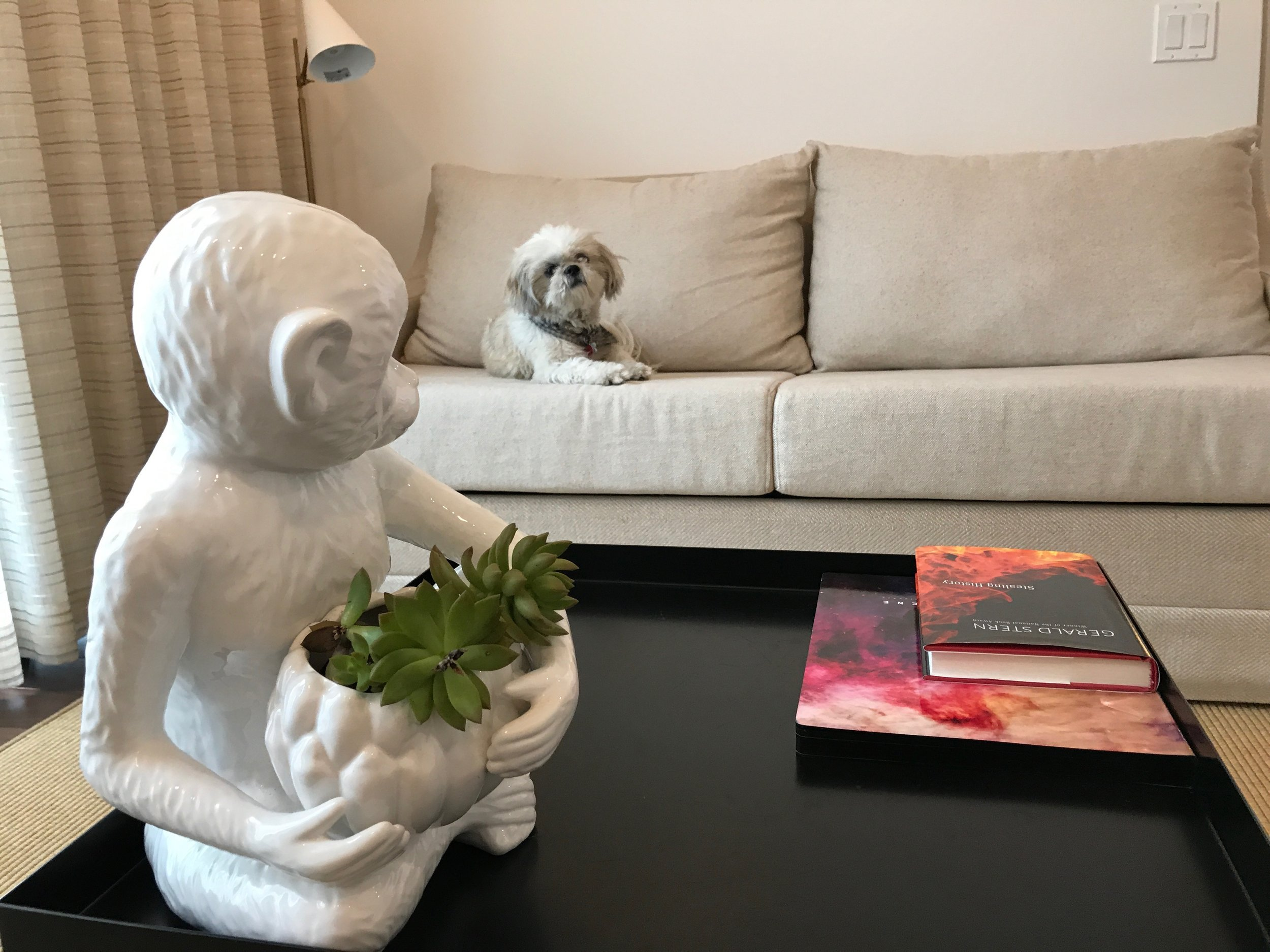 Ruby chilling out in our suite. The Betsy South Beach is pet-friendly.