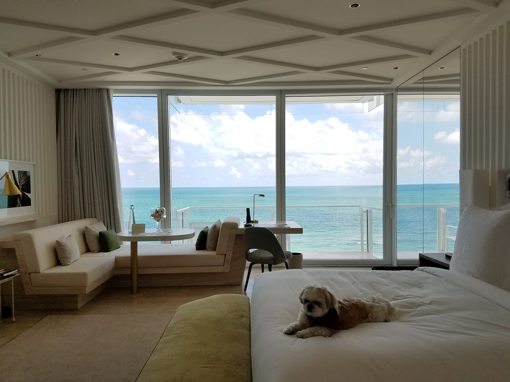 My sun-drenched room (I brought my pup, Ruby... the hotel is uber pet friendly!)