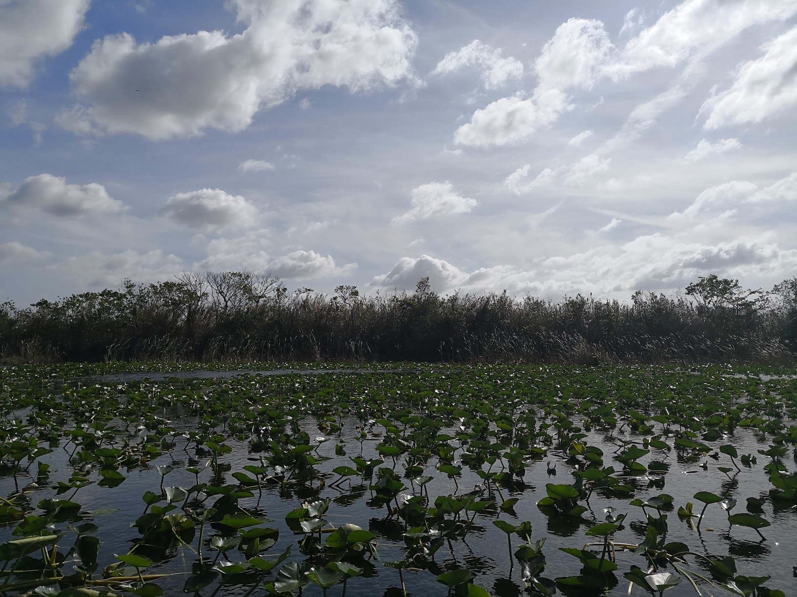 The Everglades is actually stunning if you go alone.