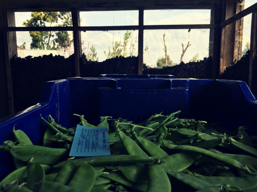 Green-Beans-1024x766.png