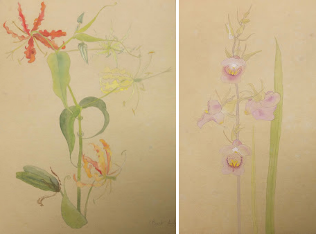 Watercolours -