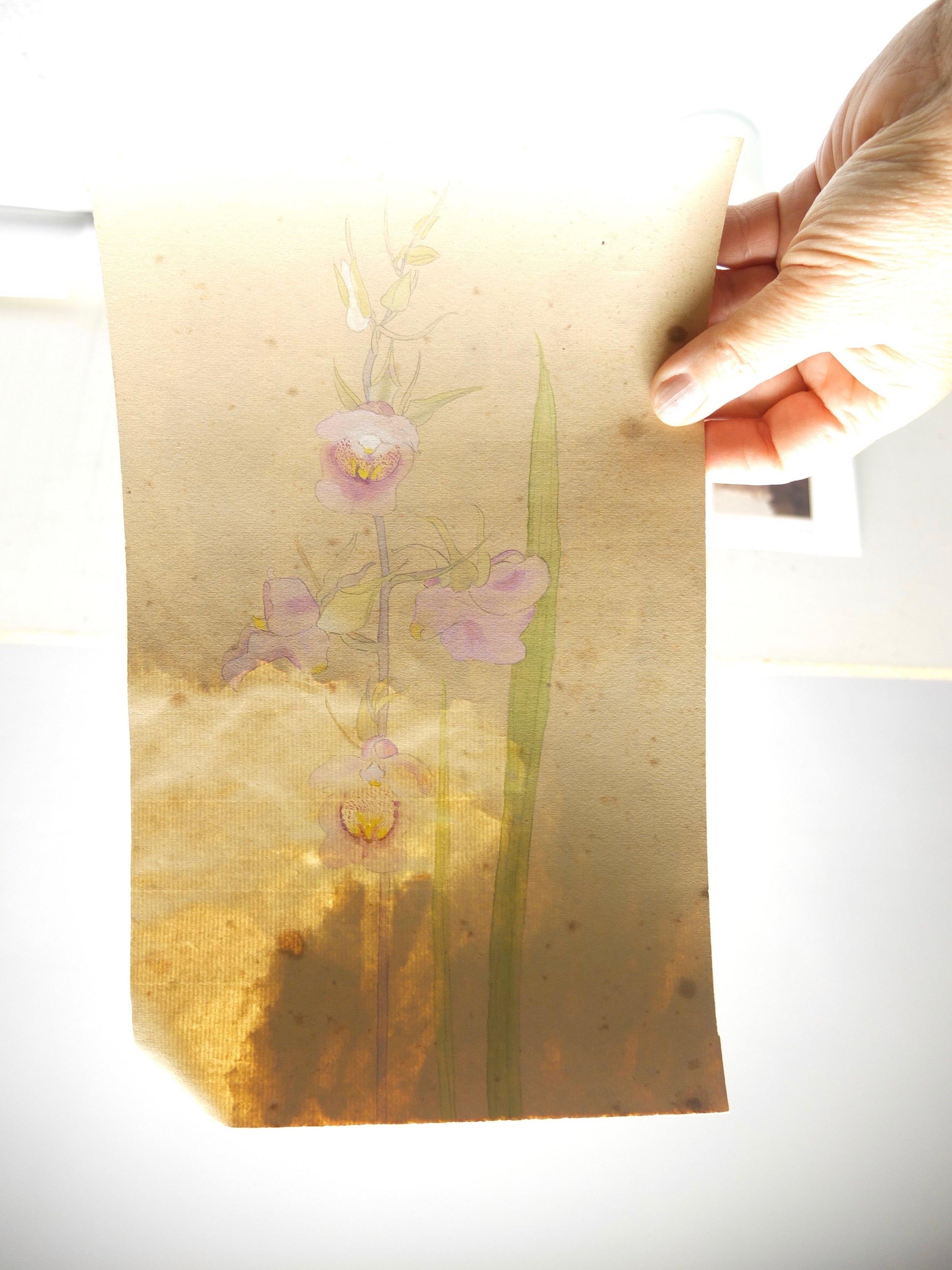 Botanical watercolour DT.jpg