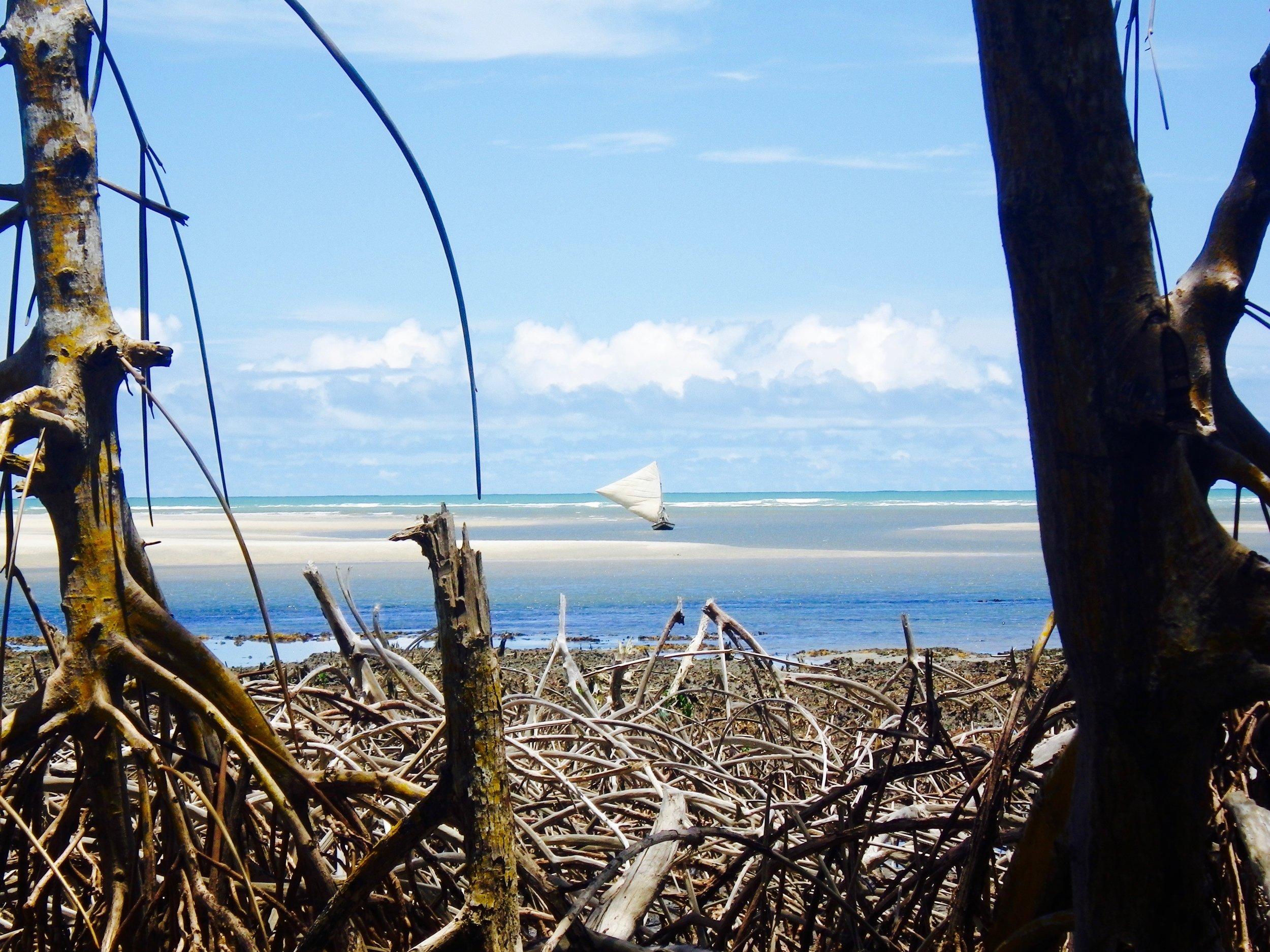 Mangrove Guriu.jpg