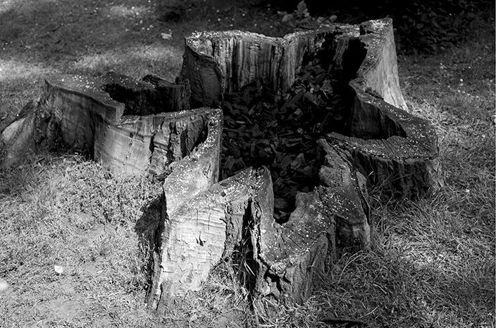 Charcoal Tree.smallcopy.jpg