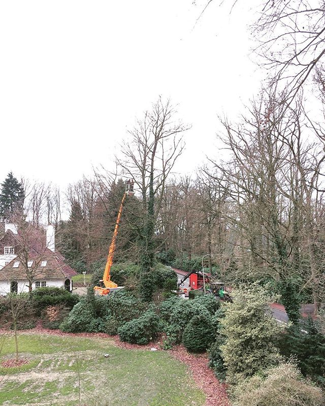 Enough work for today! Taking down a couple of big beach and oak trees🌳🌳#boomverzorging #bosbouw #enschede #baumpflege #baumfällung #arborist #treefalling #forestry