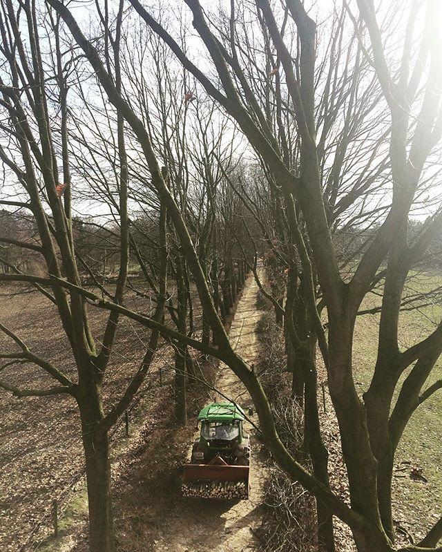 Laanbomen snoeien in België😃🇧🇪 #boomverzorging #snoeien #bosbouw #belgië #baarle #baumpflege #forstwirtschaft #arborist #treecare #forestry