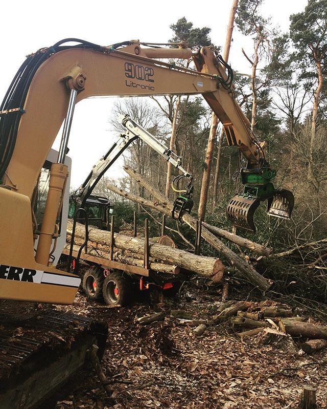 Bomen kappen langs het spoor Hengelo - Enschede voor de veiligheid🌳🌳🌳 #bosbouw #bomen #boomverzorging #baumpflege #forstwirtschaft #liebherr #forestry #treefall #valtra