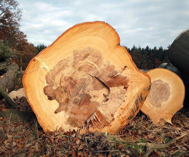 The biggest baddest tree got down!💪 . . . #arbor #arborist #treefall #tree #wood #treeremoval #forestry #treecutting #lumberjack #trees #stihl #husqvarna #forest #logg #zagen #bosbouw #boomverzorging #baumpflege #baumfällen #forst #holz #logging #forstwirtschaft #chainsaw #baum #enschede #oak #hofteboekelo