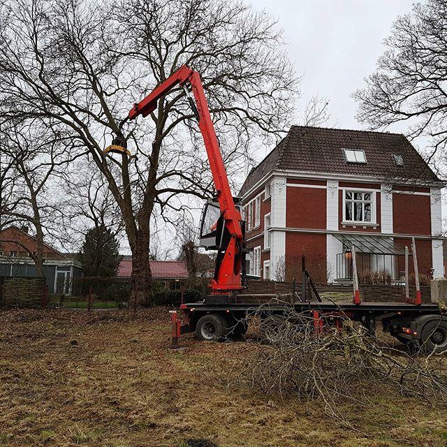 Before and after cutting a tree in Schüttorf Germany!🌳 . . . #baum #baumfällung #boom #boomverzorging #bosbouw #tree #treefall #baumpflege #bosbeheer #landgoed