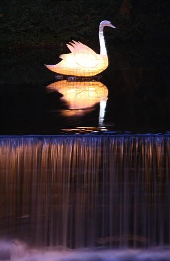 Swan(25k).jpg