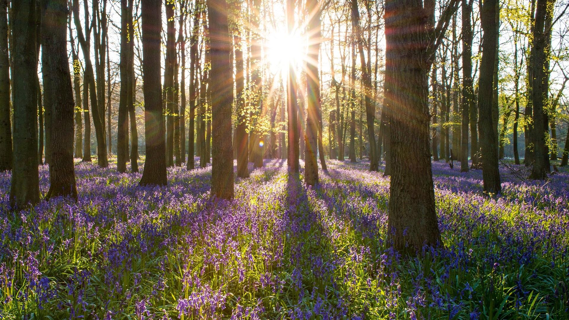 Woodland-Management-Bluebells.jpg