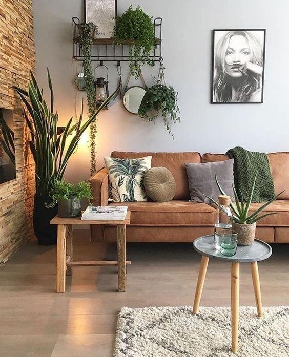 plants in house.jpg