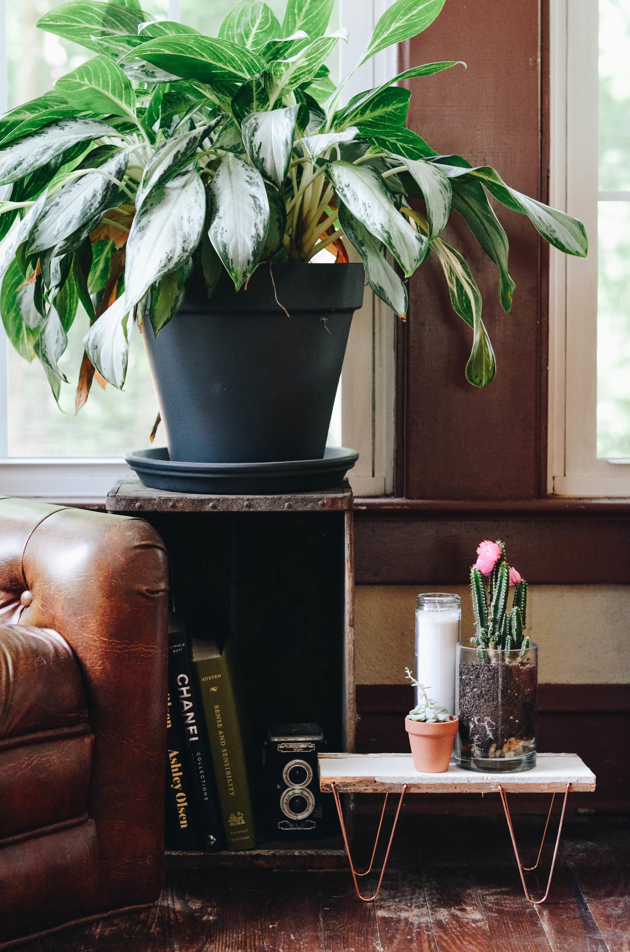 Mini Hairpin Leg Plant Stand DIY
