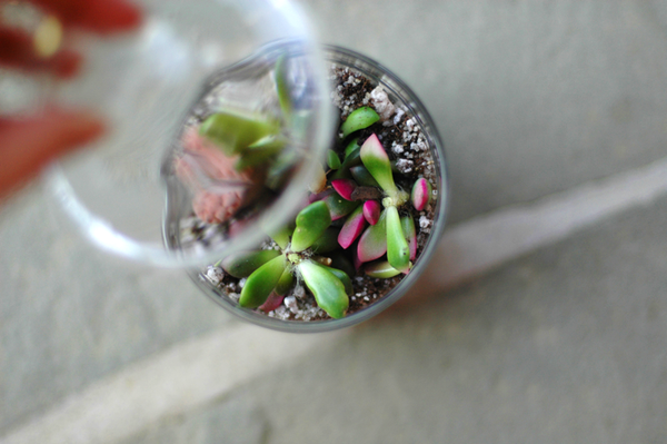 Fine and Feathered - Terrarium