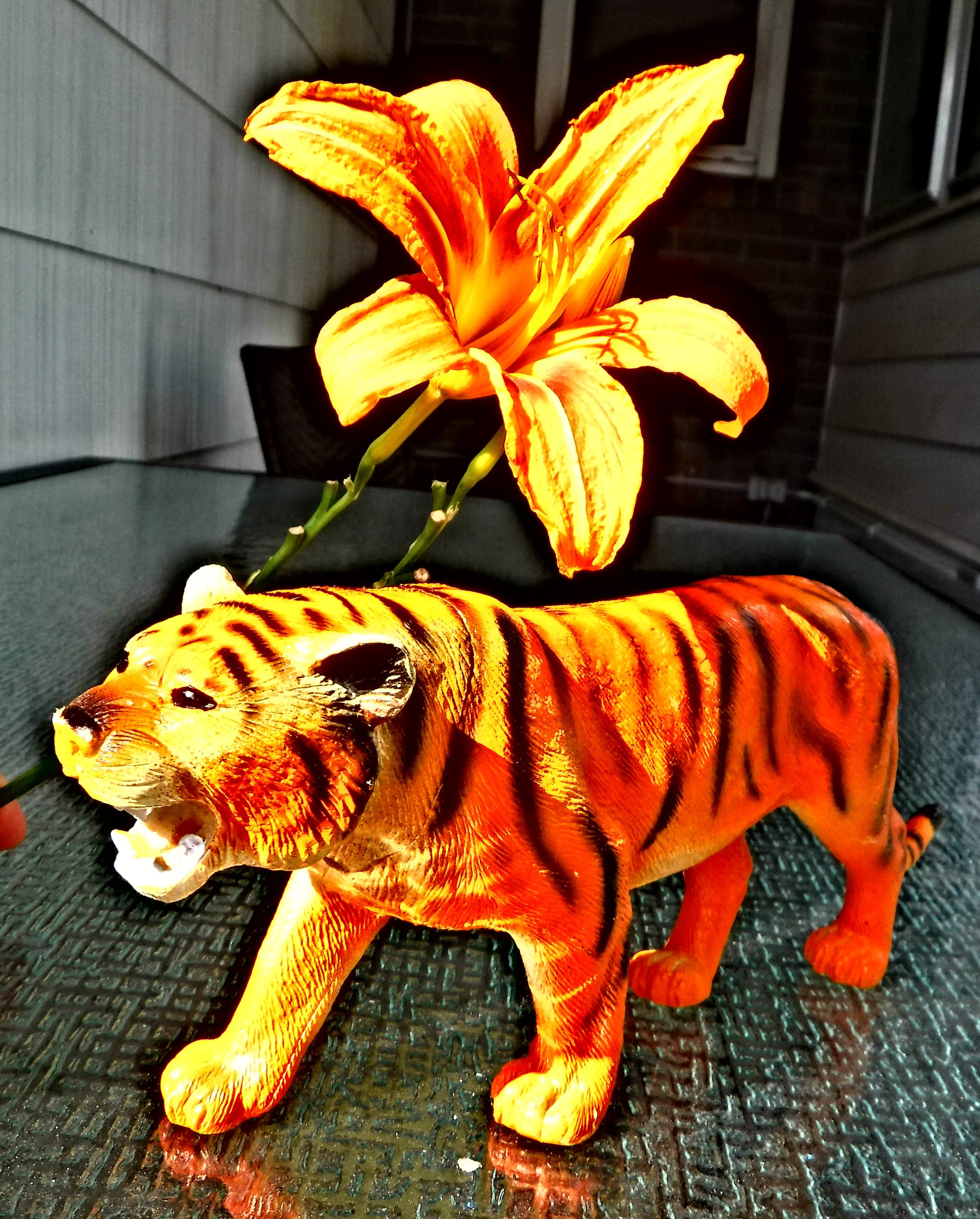 Best tiger and lily photo for painting