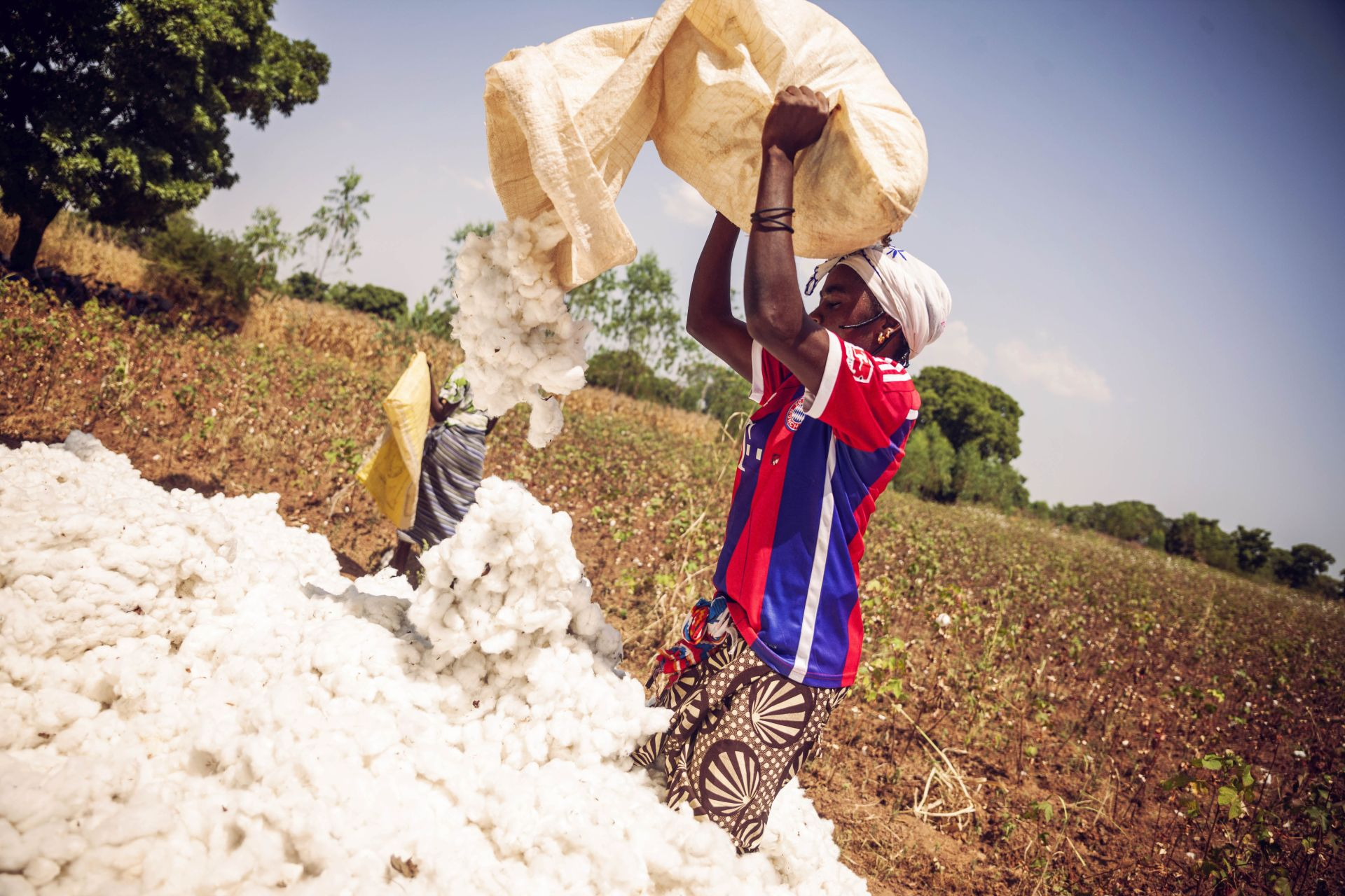 the cotton connection.jpg
