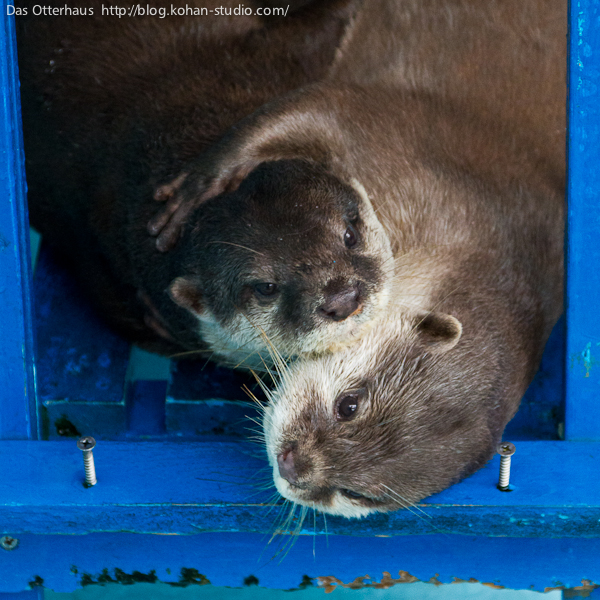 Otter Resists a Kiss But Gets One Anyway 2