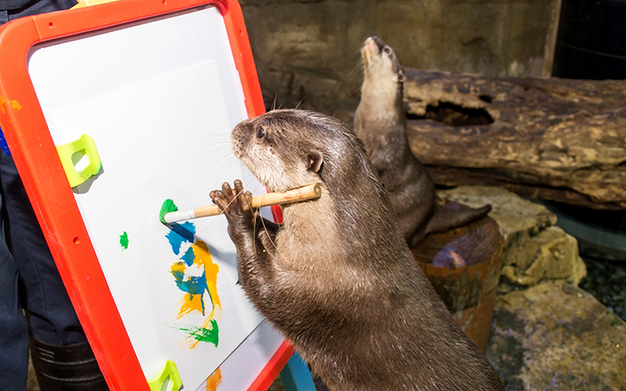 Otter Artistes Concentrate on Their Paintings 1