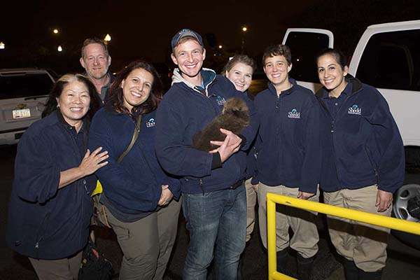 Orphaned Sea Otter Pup 681's First Night with Her Caretaker Humans at Shedd Aquarium 1