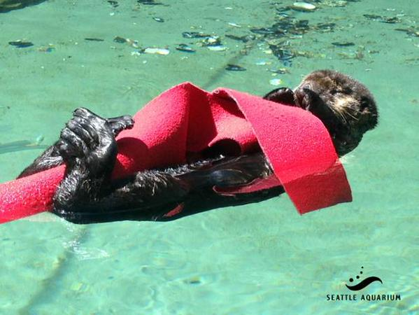 Sea Otter Pup Mishka Curl Up with Faux Kelp