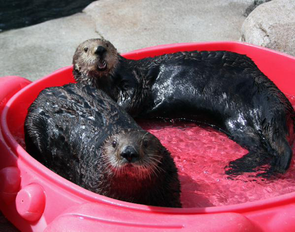 Come Join Us in the Kiddie Pool!