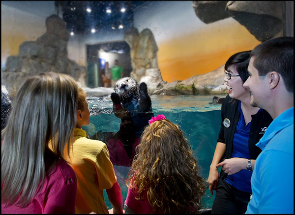 Sea Otter Greets Her Adoring Fans