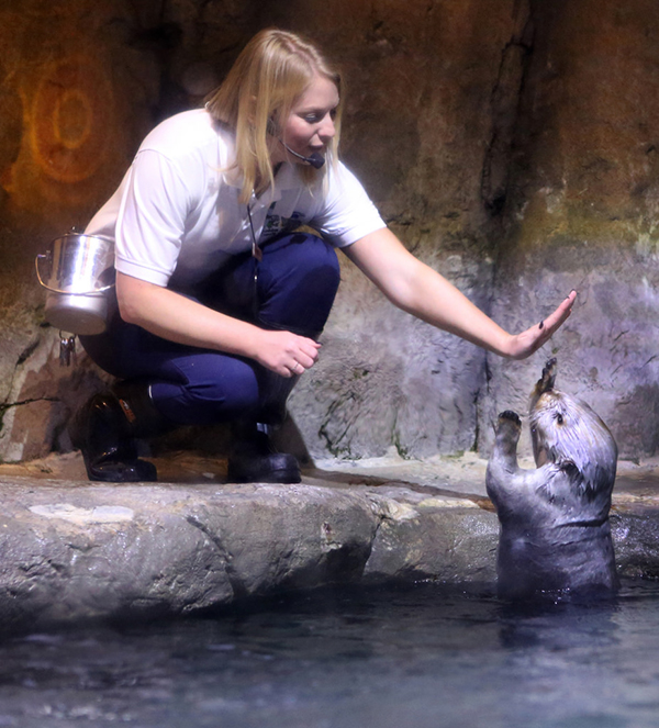 Sea Otter Gives Her Keeper a High-Five