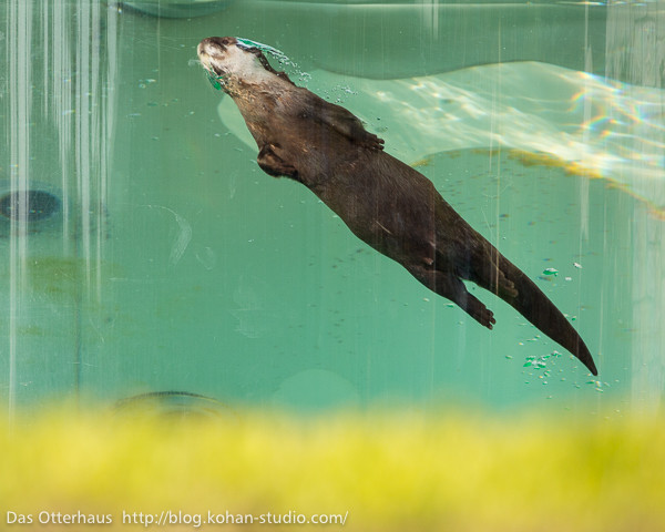 Superotter Searches for Underwater Crime