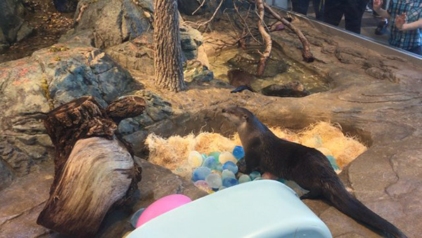 Otter Found SO Many Easter Eggs Yesterday!