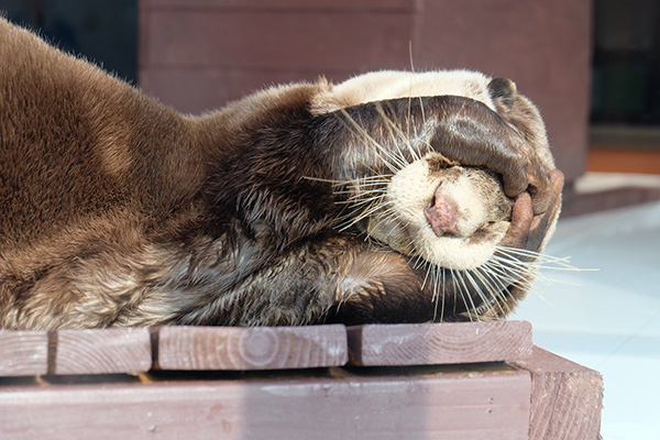 Otter Is in Denial About It Being Monday