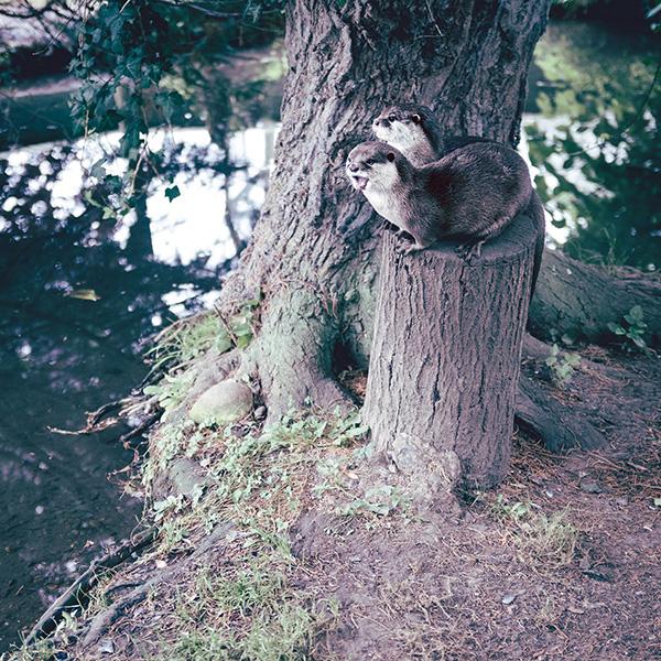 A Tall Tree Stump Makes a Pretty Good Lookout Perch