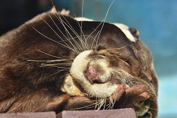 Otter Is NOT Ready to Get Up and Face the Day