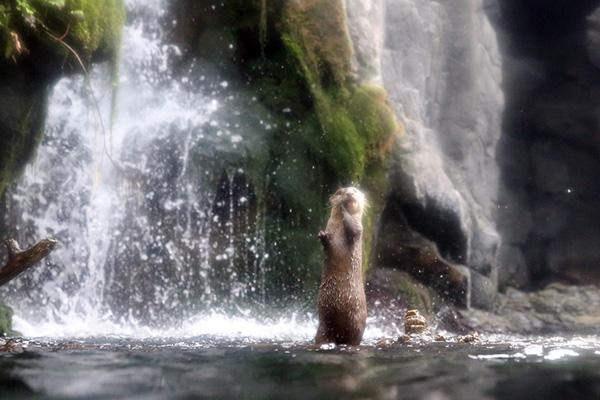 Don't Go Chasing Otterfalls...
