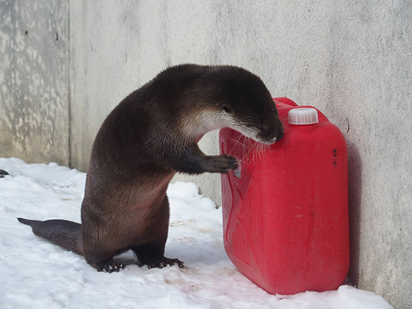 Some Otters Just Want to Watch the World Burn